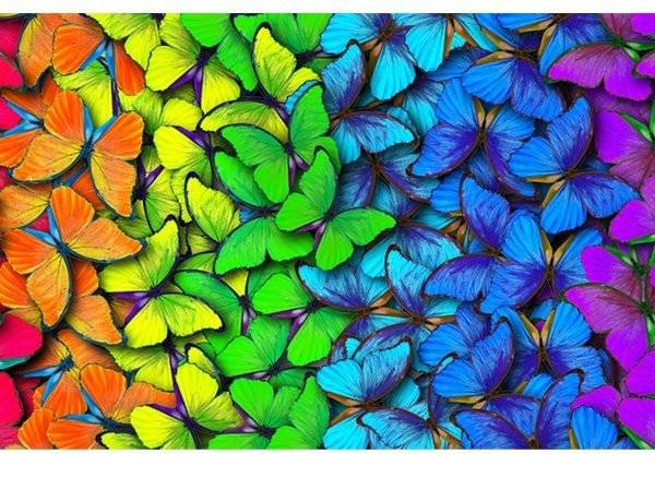 Rainbow Butterflies Laminated Vinyl Cover Self-Adhesive for Desk and Tables