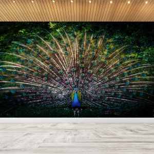 Colourful Peacock Theme Dark Wall Mural Photo Wallpaper UV Print Decal Art Décor