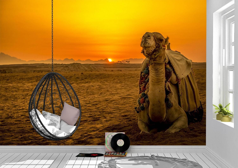 Camel in the Desert Wall Mural Photo Wallpaper UV Print Decal Art Décor