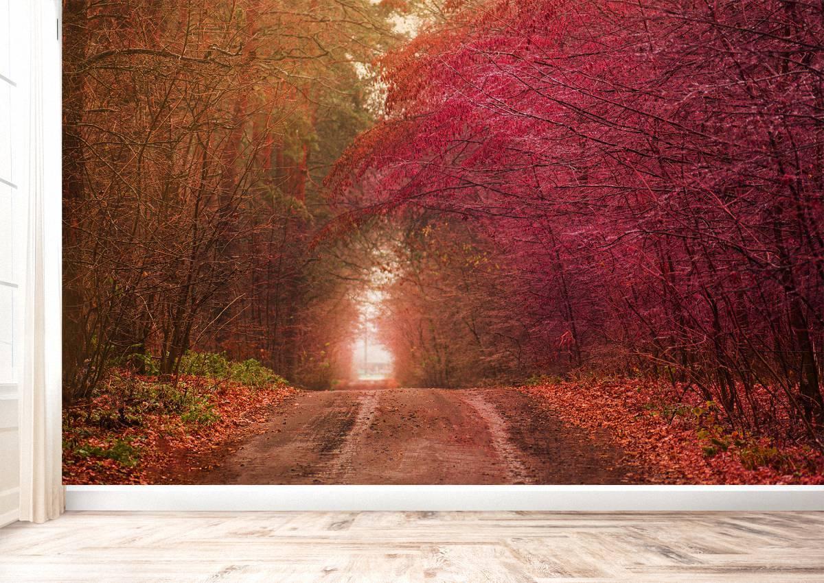 Beautiful Autumn Tree Tunnel Wall Mural Photo Wallpaper UV Print Decal Art Décor